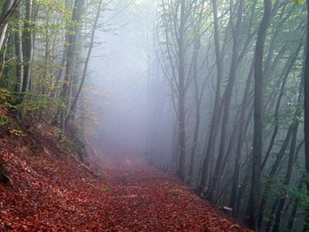 جنگل الیمستان کجاست,جنگل الیمستان در پاییز