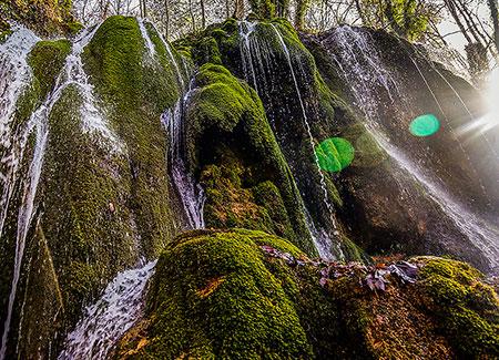 جنگل راش مازندارن