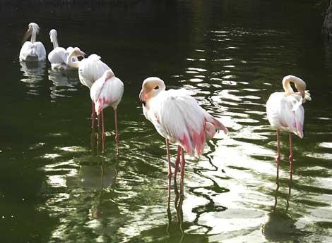 باغ   پرندگام کیش