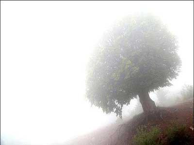 پیادهروی روی ابرها در قدیمیترین جنگل جهان