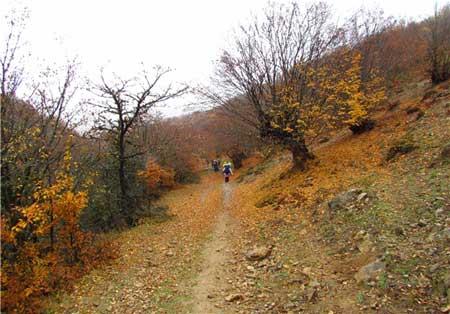 پاییز در «جنگل ابر» جلوهای زیبا از طبیعت