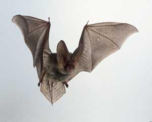 به مهمانی خفاش های آویزان بروید!