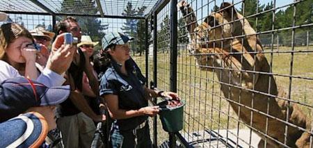 باغ وحش lehe1 ledu,دیدنی های جهان ,باغ وحش جنگلی چین