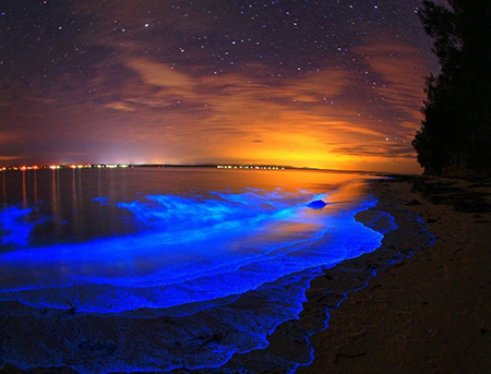 خلیج موسکیتو,خلیج ماسکیتو,خلیج موسکیتو در پورتوریکو