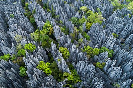 جنگل سینجی,جنگل سینجی در ماداگاسکار,جنگل چاقو در ماداگاسکار