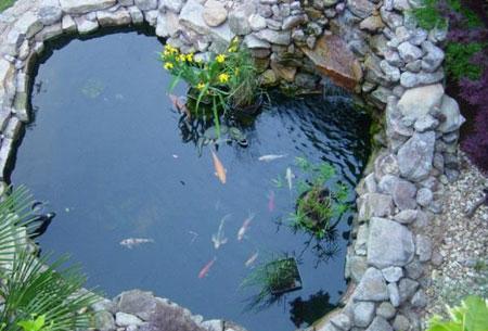 نگهداری ماهی,طراحی حوض های شیک