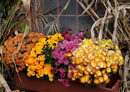 ایده های پاییزی محوطه بیرونی,دکوراسیون های پاییزی