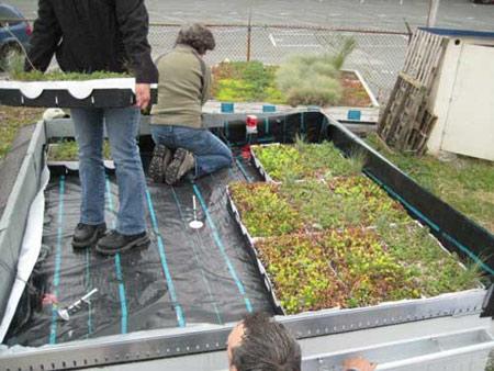 طراحی پشت بام, دکوراسیون بام های سبز