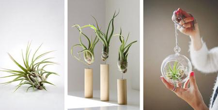 نکاتی برای استفاده از گل های آپارتمانی,طراحی خانه با گل های آپارتمانی