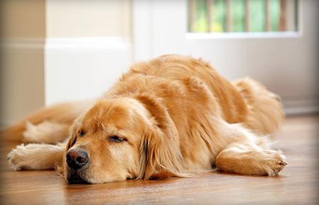 توصیه های مراقبت از سگها بعد از عقیم سازی,آشنایی با مراقبت های از سگها بعد از عقیم سازی