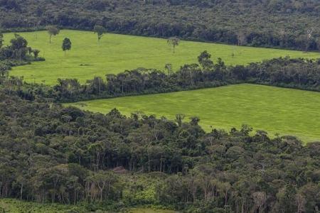 جنگلهای آمازون,اخبار تکنولوژی ,خبرهای تکنولوژی