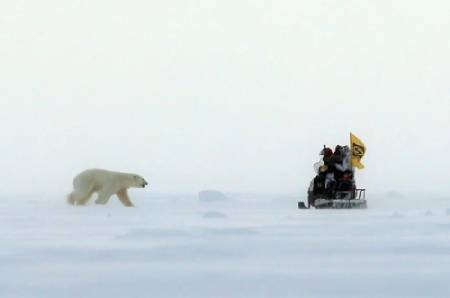 عکسهای جالب,عکسهای جذاب, خرس قطبی
