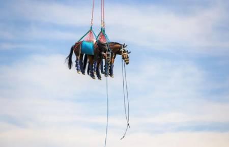 عکسهای جالب,عکسهای جذاب,اسب صدمه دیده