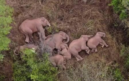 عکسهای جالب,عکسهای جذاب,استراحت فیل ها