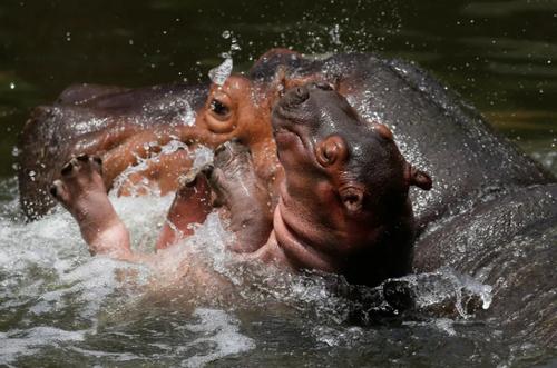 عکسهای جالب,عکسهای جذاب,اسب های آبی