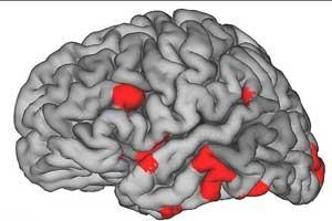 مغز قبل از قلب عاشق می شود