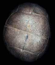 اولين توپ فوتبال,عکس اولين توپ فوتبال,ساخت اولين توپ فوتبال