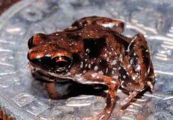 کوچک ترین موجودات, کوچک ترین موجودات جهان