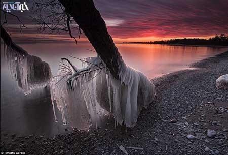 درختان یخی در دریاچه اونتاریو