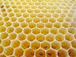قیمت کندو عسل سال 95 مدرک مهندسی «زنبور عسل» هم جعلی است!