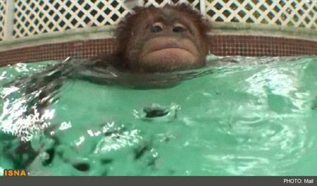 شناکردن میمونها , شناکردن, پستانداران