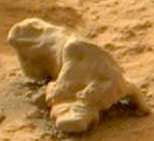 مارمولک مریخ ,کره مریخ
