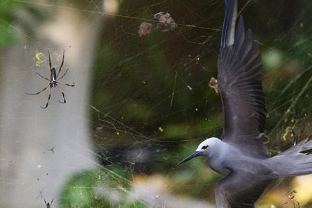 عکس عکاس سال حیات وحش,عکس موقعیت چسبناک