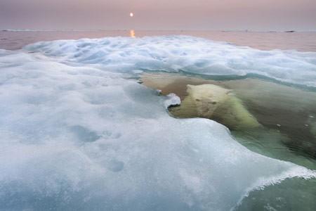 عکس عکاس سال حیات وحش,عکس خرس آبی
