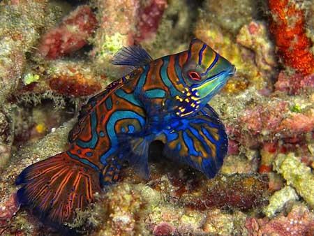 تصاویری از موجودات دریایی بی نظیر در آبهای گرم اندونزی