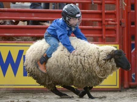 مسابقه سواری گرفتن از گوسفند (کانادا)