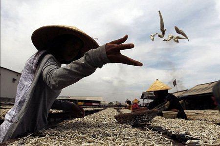 فعالیت کارگران در یک بندر ماهیگیری- شمال جاکارتا، اندونزی