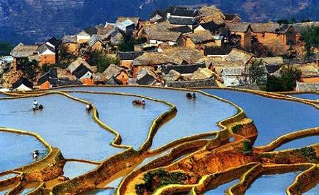 زمین های زیر کشت برنج در استان یون آن، چین