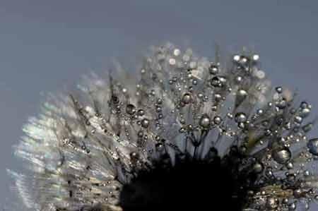 عکسبرداری از قطرات آب بر روی گل ، آلمان