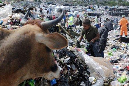 در جستجوی غذا، فقر در منطقه Tegucigalpa هندوراس