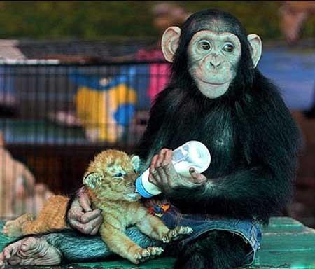 عکسهای جالب,تصاویر جالب,میمون