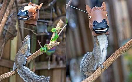 عکسهای جالب,عکسهای جذاب,سنجاب
