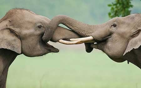 عکسهای جالب,تصاویر جالب,فیل