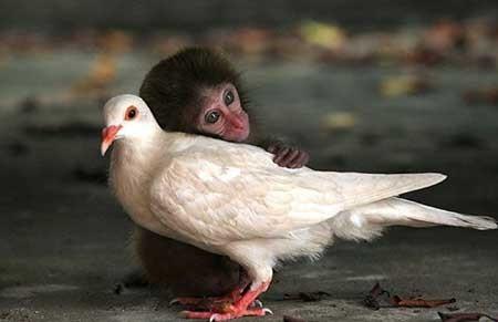 عکسهای جالب,تصاویر جالب,کبوتر