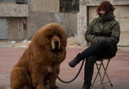 عکسهای جالب,تصاویر دیدنی,سگ اصیل