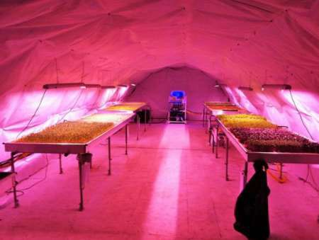 اخبار,اخبار علمی,بزرگترین مزرعه زیرزمینی