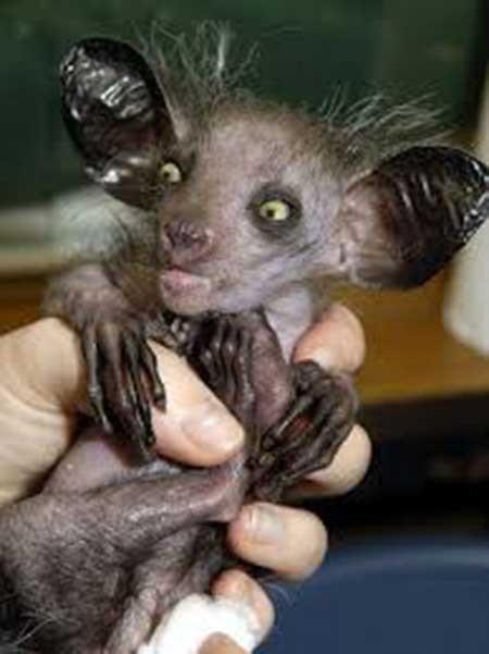 اخبار,اخبارگوناگون,عجیب ترین جانوران دنیا
