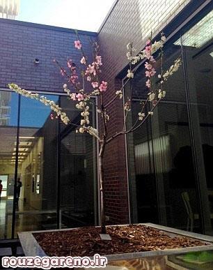 اخبار,اخبار گوناگون,درخت, http://www.mihanfaraz.ir/post/979