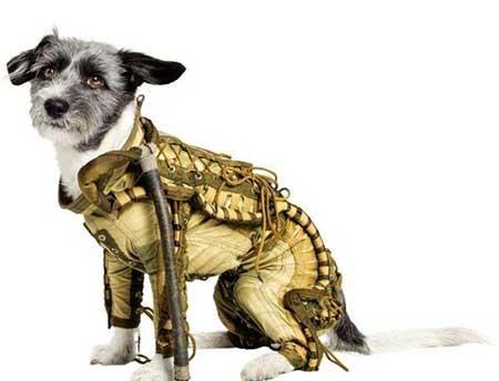 اخبار,اخبار علمی , لباسهای سگهای فضانورد