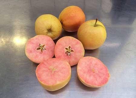 اخبار,اخبار گوناگون ,عجیب ترین سیب های دنیا