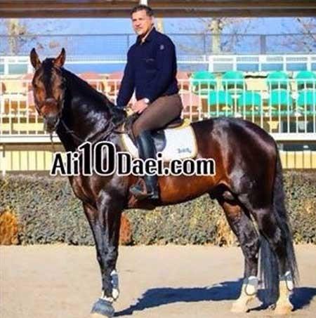 قیمت اسب علی دایی