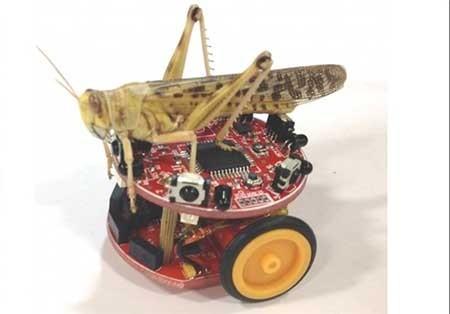 اخبار,اخبار علمی,رباتهای مقلد