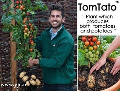 عجیب ترین پیوند گیاهی در دنیا (+عکس)