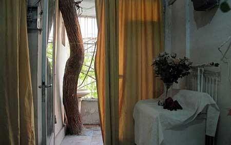 خانهای روی درخت در لویزان تهران (+عکس)