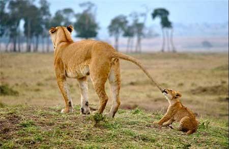 اخبار,اخبار گوناگون ,تصاویر شگفتانگیز از حیات وحش