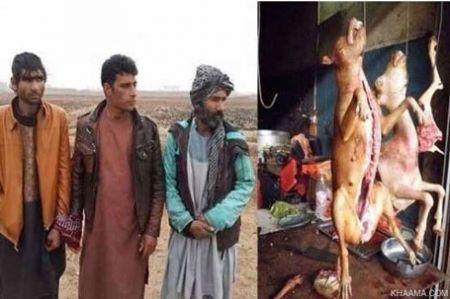 9309 10t1784 فروشندگان گوشت سگ بازداشت شدند